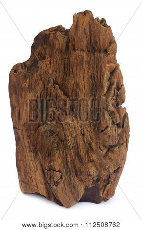 Bogwood Over White Background