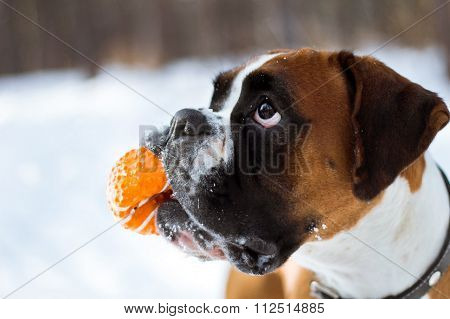 Dog Holding A Ball In His Mouth