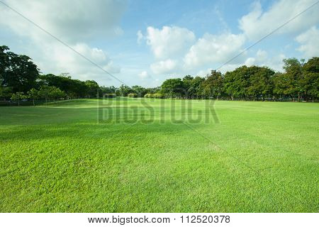Beautiful Morning Light In Public Park With Green Grass Field And Green Fresh Tree Plant Perspective
