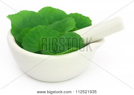 Medicinal Thankuni Leaves With Mortar And Pestle