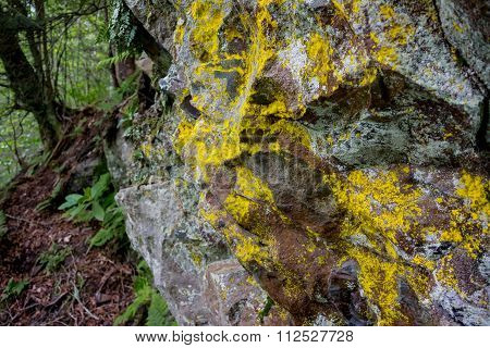 Lichen On Rocks In The Great Smoky Mountains