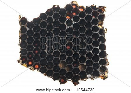 Real honeycomb from a bee hive
