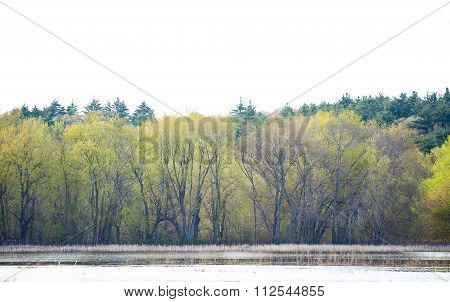 Tree-lined Shore Of Pond