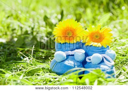 Blue booties and chrysanthemum