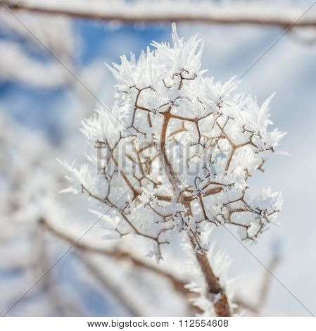 Winter Hoar Frost