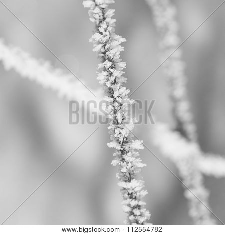 Hoar Frost On A Wire Fence