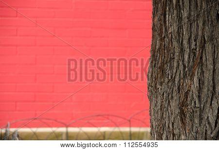 California Pepper Tree Framing Red Painted Wall In Old Town