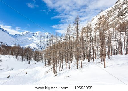 Snowboarders skiing in a snowy mountain forest. Gressoney, Val d'Aosta, Italy, West italian Alps,Europe.