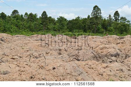 The Soils