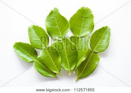 green kaffir lime leaves