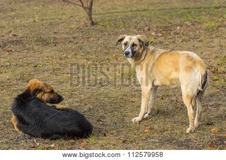 Pair of old stray dogs having rest outdoors dreaming about Christmas eve