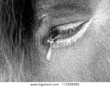 Horse Suffering Photography