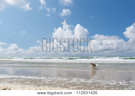 Dog swimming in the North sea