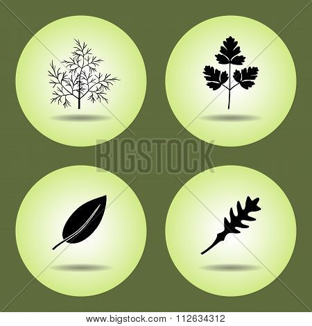 Food, herbs set. Parsley, laurel, rucola, dill icons. Black silhouette with shadow on light green ba