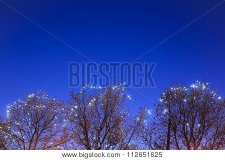 Illuminated Treetops At Advent Time