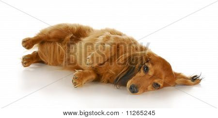 Dog Laying On Side