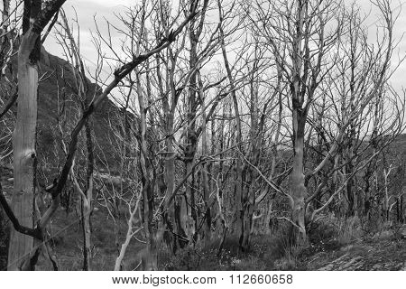 Trees Damaged In Forest Fire