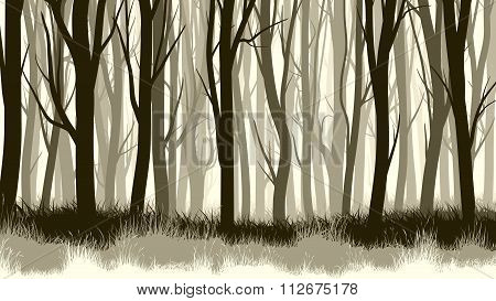 Horizontal Illustration With Many Trunks Tree.
