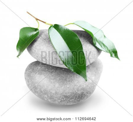 Rubber plant and spa stones isolated on white