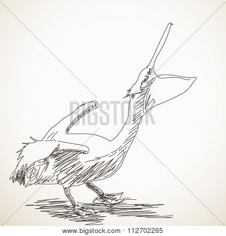 Hand drawn sketch of pelican with open beak