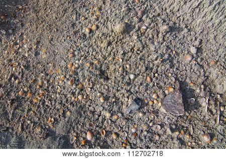 Ses Salines Seashells