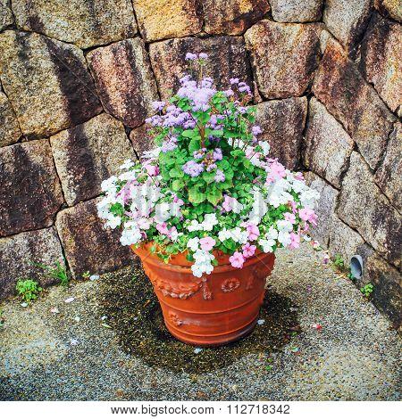 A Clay Flower Plot