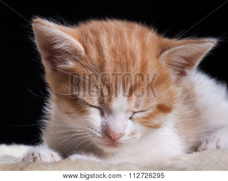Little kitten sleeping