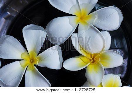 White Frangipani Plumeria Tropical Flower Floating On Water