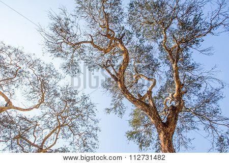 Beautiful old trees in Ananda temple at Bagan Myanmar