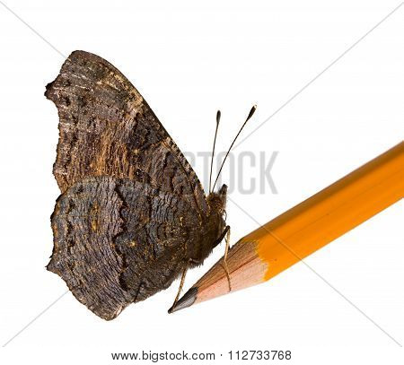 Butterfly On Lead Pencil Isolated On White