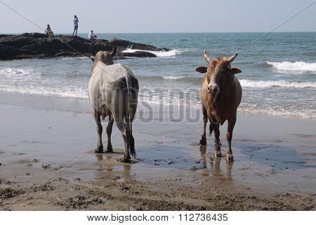 Fight of buffalo s