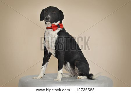 Mixed-breed Dog with Red Bow