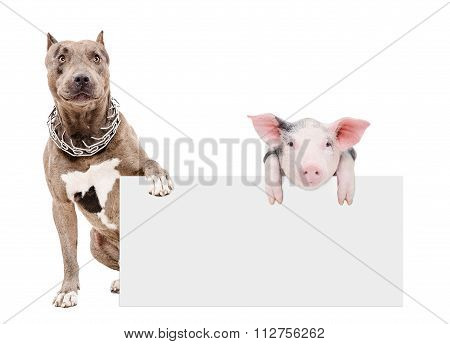 Pit bull and piglet sitting with a banner