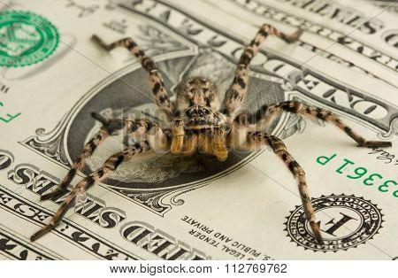 Poison Spider Safeguarding Money