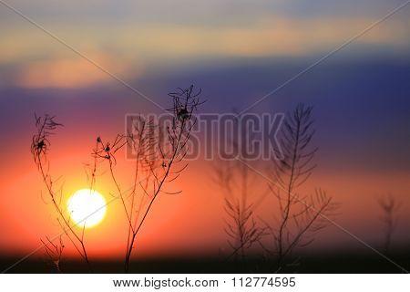 Dry grass on sunset background - soft photo