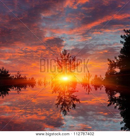 sunset over lake surface in forest