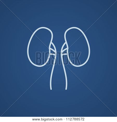 Kidney line icon for web, mobile and infographics. Vector light blue icon isolated on blue background.