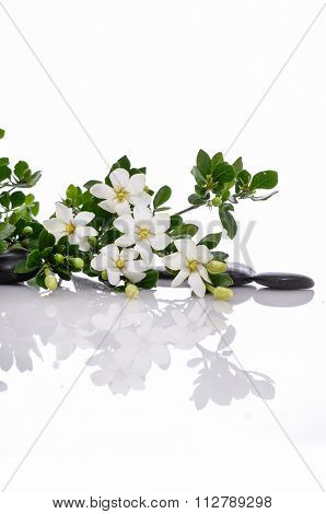 gardenia flower with black stones with reflection