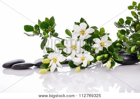 spa concept  gardenia flower with black stones