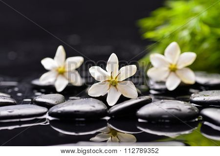 Three gardenia flower and green leaf on wet pebbles