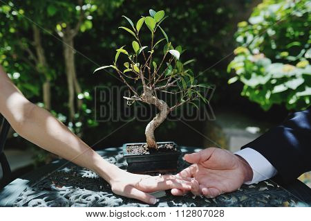 Couple Bride And Groom Hands, On Background A Little Bonsai - Conceptual Image