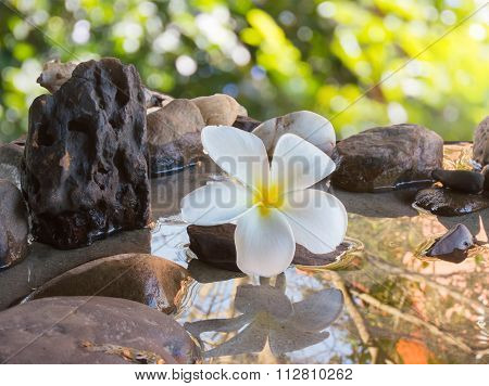 Flower Plumeria Decorated On Water And Pebble Rock For Spa Meditation Mood