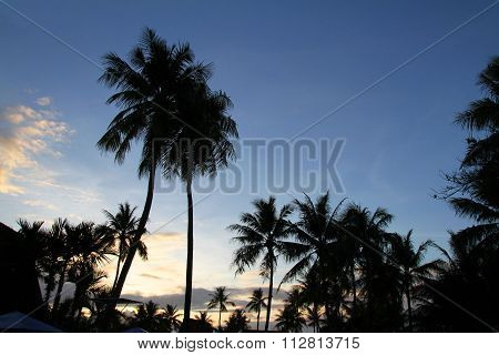 Palm tree in Guam Micronesia (evening scene)