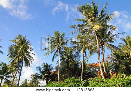 Palm tree and blue sky in Guam Micronesia