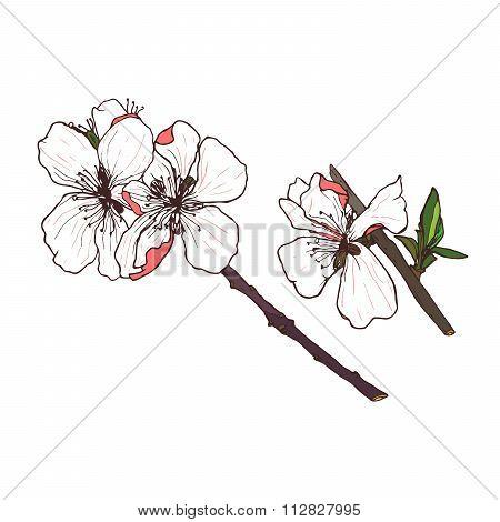 Vector Bloomed Flower Line Drawing Illustration