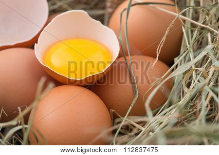 Chicken eggs in decorative straw nest.