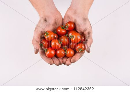 Human hands filled with fresh cherry tomatoes