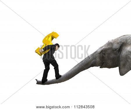 Businessman Carrying Dollar Sign Balancing On Elephant Trunk