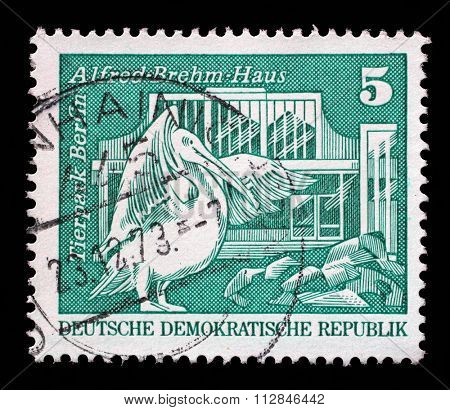 GERMAN DEMOCRATIC REPUBLIC - CIRCA 1973: A stamp printed in Germany shows Eastern white pelican and Alfred Brehm House, Tierpark, Berlin, circa 1973.