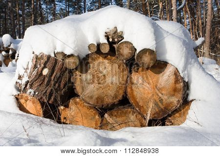 wooden logs under snow in winter forest